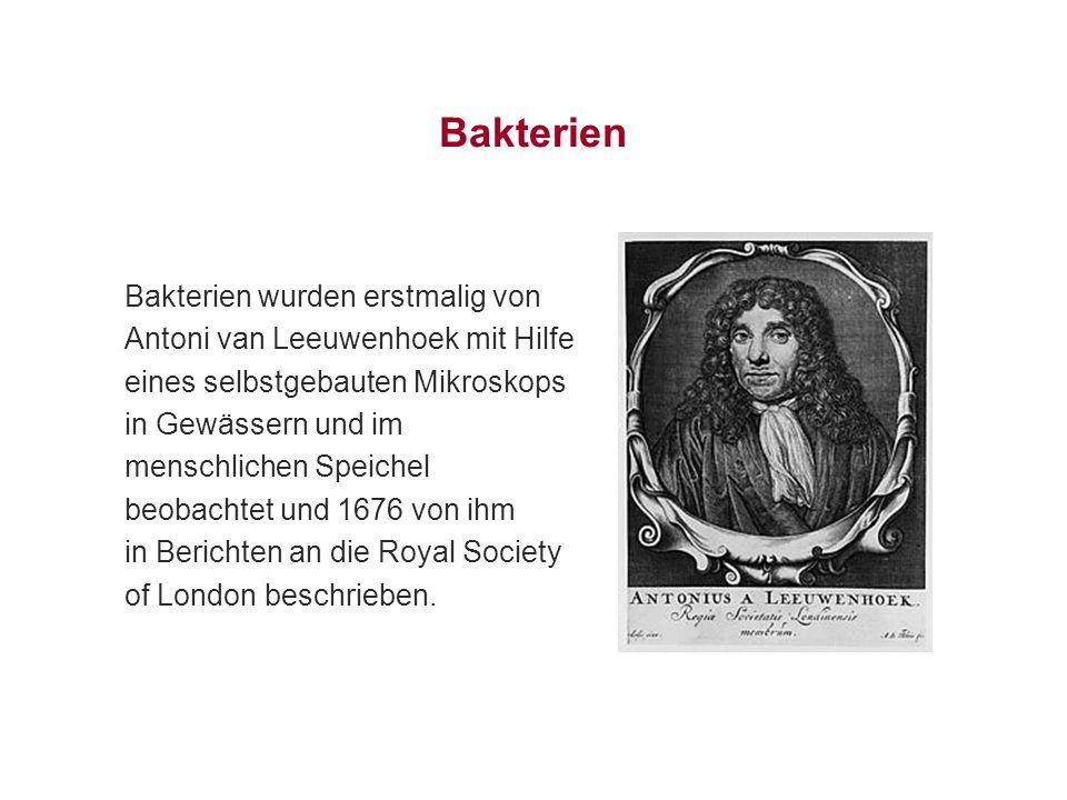Bakterien Bakterien wurden erstmalig von Antoni van Leeuwenhoek mit Hilfe eines selbstgebauten Mikroskops in Gewässern und im menschlichen Speichel be
