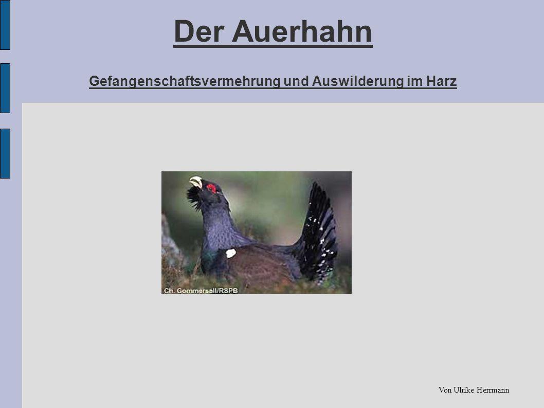 Der Auerhahn Gefangenschaftsvermehrung und Auswilderung im Harz Von Ulrike Herrmann