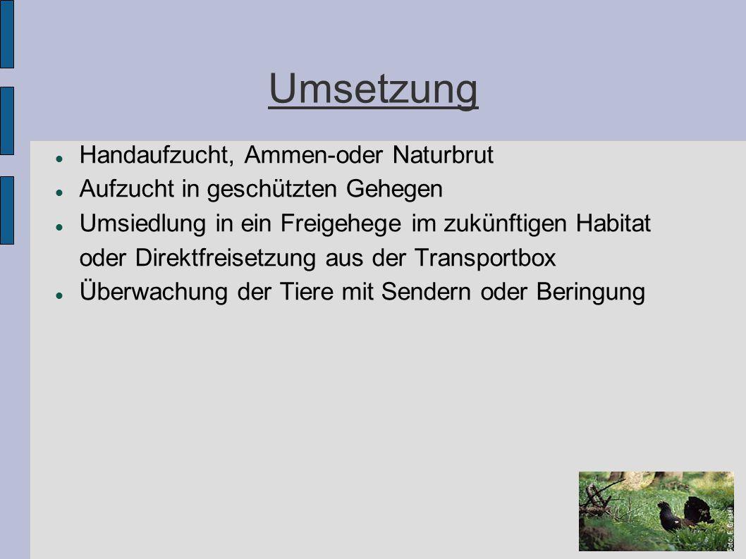 Umsetzung Handaufzucht, Ammen-oder Naturbrut Aufzucht in geschützten Gehegen Umsiedlung in ein Freigehege im zukünftigen Habitat oder Direktfreisetzun