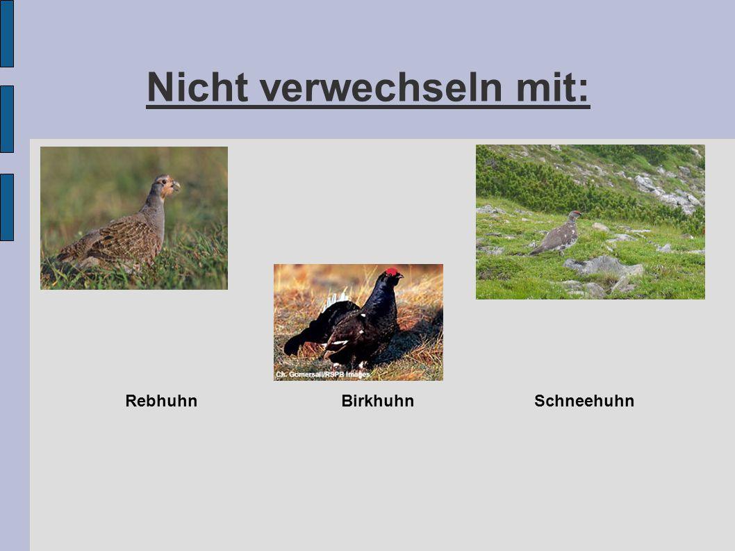 Gefangenschaftsvermehrung und Auswilderung des Auerhahns Oder: Das teuerste Fuchsfutter der Welt Mjam!