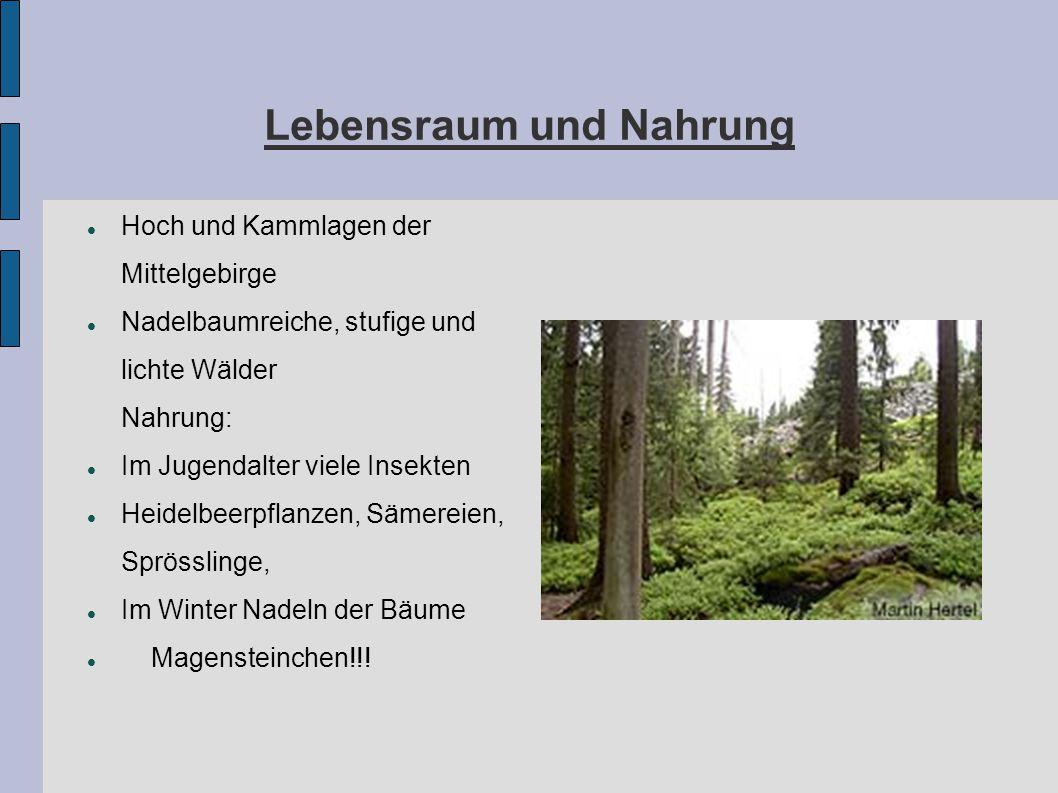 Lebensraum und Nahrung Hoch und Kammlagen der Mittelgebirge Nadelbaumreiche, stufige und lichte Wälder Nahrung: Im Jugendalter viele Insekten Heidelbe