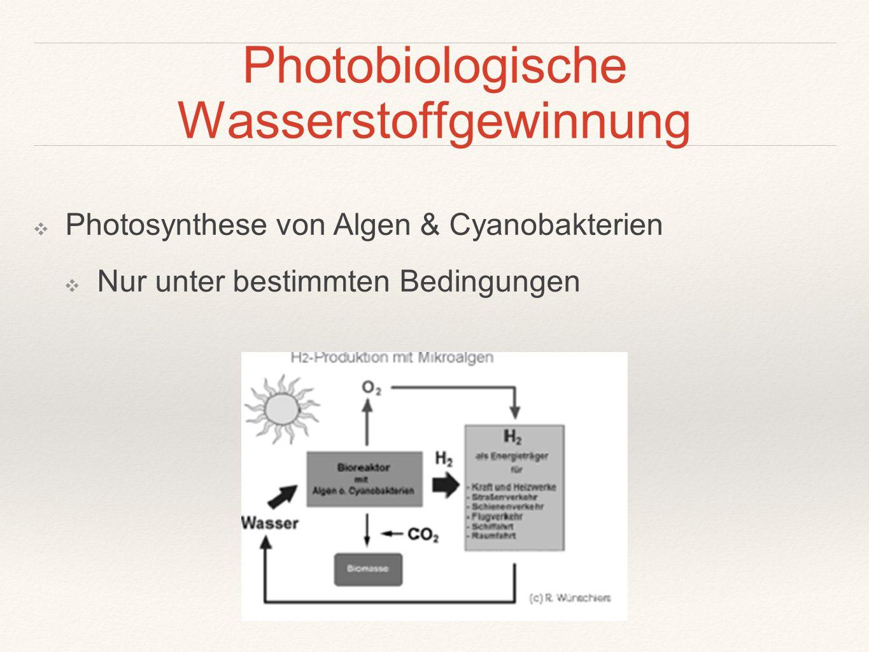 Photobiologische Wasserstoffgewinnung ❖ Photosynthese von Algen & Cyanobakterien ❖ Nur unter bestimmten Bedingungen