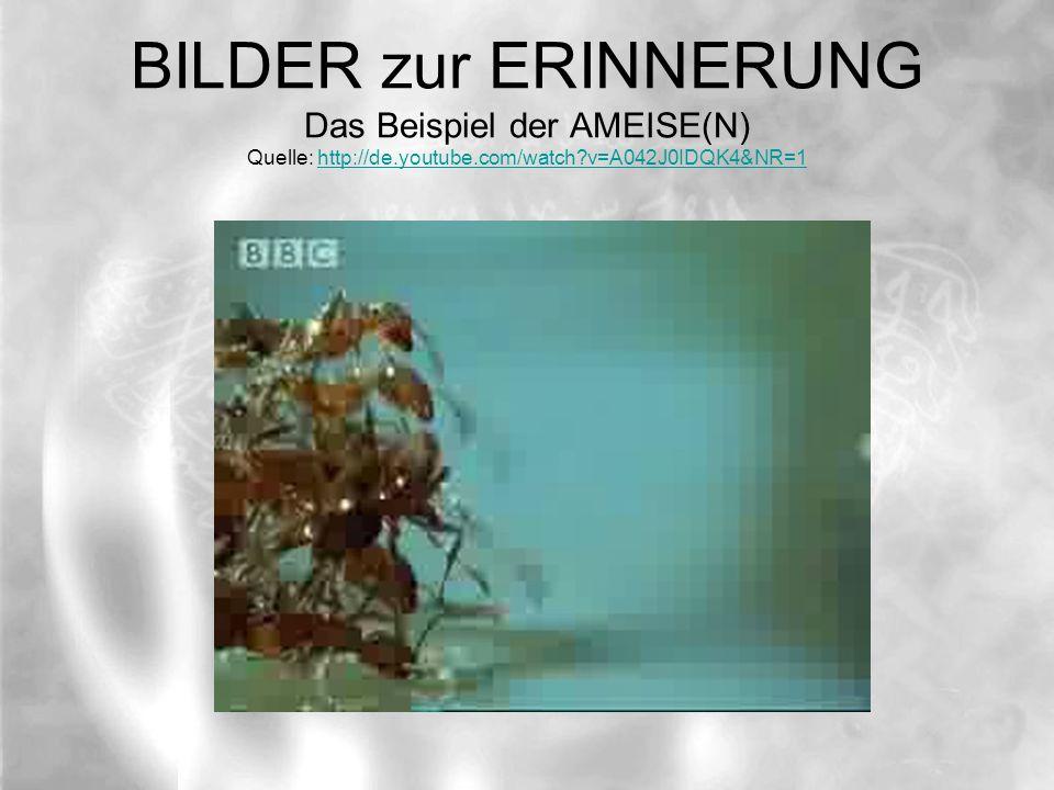 BILDER zur ERINNERUNG Das Beispiel der AMEISE(N) Quelle: http://de.youtube.com/watch v=A042J0IDQK4&NR=1http://de.youtube.com/watch v=A042J0IDQK4&NR=1
