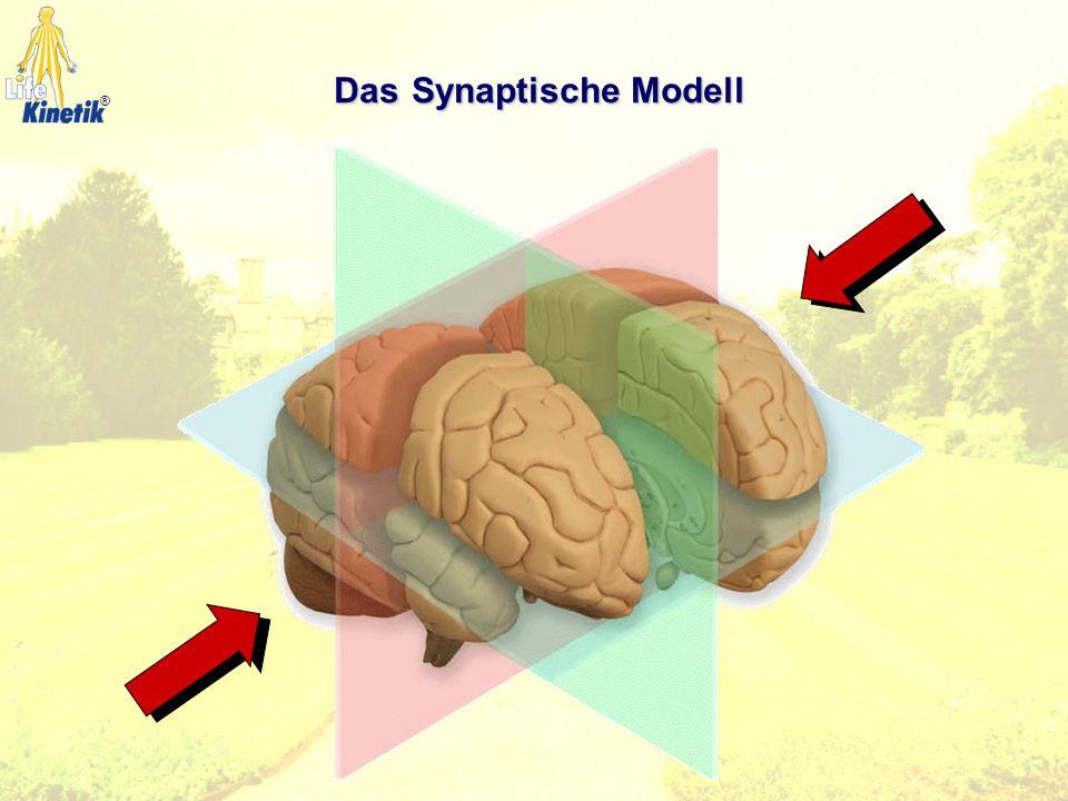 Wissen der Bewegungslehre Natürliche Gesundheitslehre Östliche Energielehre Moderne Gehirnforschung Die Bausteine ®