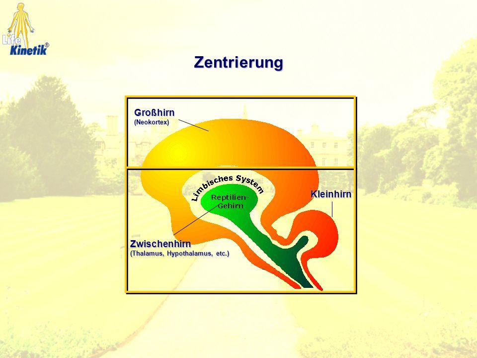 Zentrierung Zwischenhirn (Thalamus, Hypothalamus, etc.) Großhirn (Neokortex) Kleinhirn ®