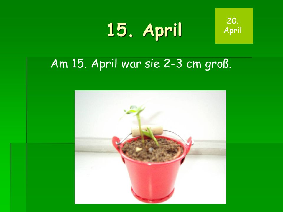 15. April 20. April Am 15. April war sie 2-3 cm groß.