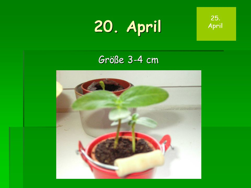 20. April Größe 3-4 cm 25. April