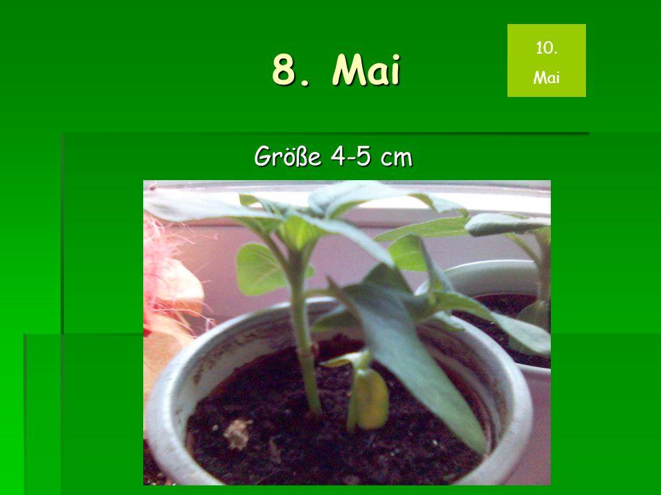 8. Mai Größe 4-5 cm 10. Mai