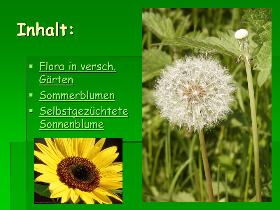 Inhalt:  Flora in versch. Gärten Flora in versch. Gärten Flora in versch. Gärten  Sommerblumen Sommerblumen  Selbstgezüchtete Sonnenblume Selbstgez