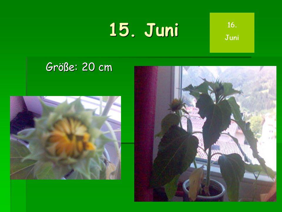 15. Juni Größe: 20 cm 16. Juni