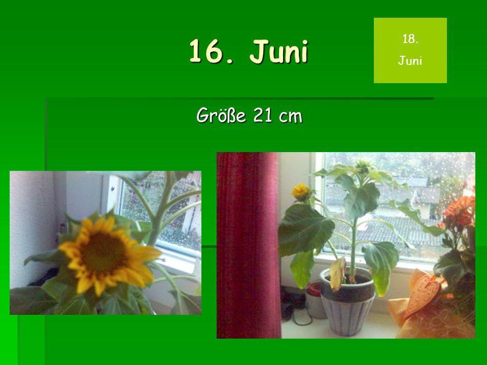16. Juni Größe 21 cm 18. Juni