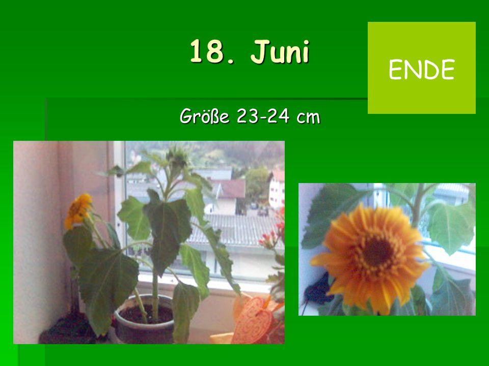 18. Juni Größe 23-24 cm ENDE