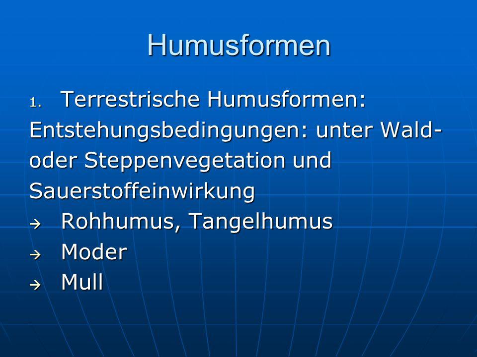 Humusformen 1. Terrestrische Humusformen: Entstehungsbedingungen: unter Wald- oder Steppenvegetation und Sauerstoffeinwirkung  Rohhumus, Tangelhumus