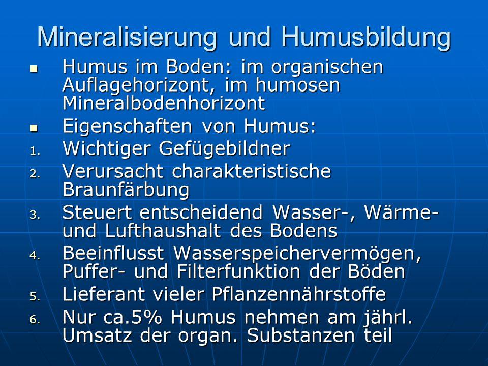 Mineralisierung und Humusbildung Humus im Boden: im organischen Auflagehorizont, im humosen Mineralbodenhorizont Humus im Boden: im organischen Auflag