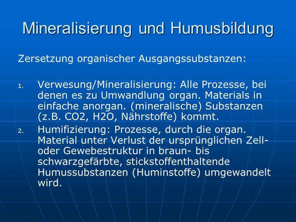 Mineralisierung und Humusbildung Zersetzung organischer Ausgangssubstanzen: 1. 1. Verwesung/Mineralisierung: Alle Prozesse, bei denen es zu Umwandlung