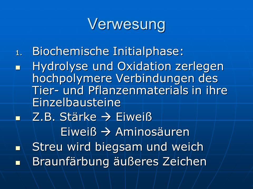 Verwesung 1. Biochemische Initialphase: Hydrolyse und Oxidation zerlegen hochpolymere Verbindungen des Tier- und Pflanzenmaterials in ihre Einzelbaust