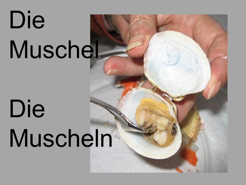 Die Muschel Die Muscheln