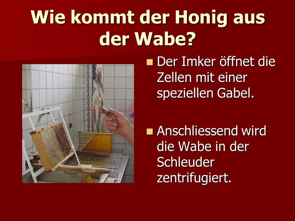 Wie kommt der Honig aus der Wabe? Der Imker öffnet die Zellen mit einer speziellen Gabel. Der Imker öffnet die Zellen mit einer speziellen Gabel. Ansc