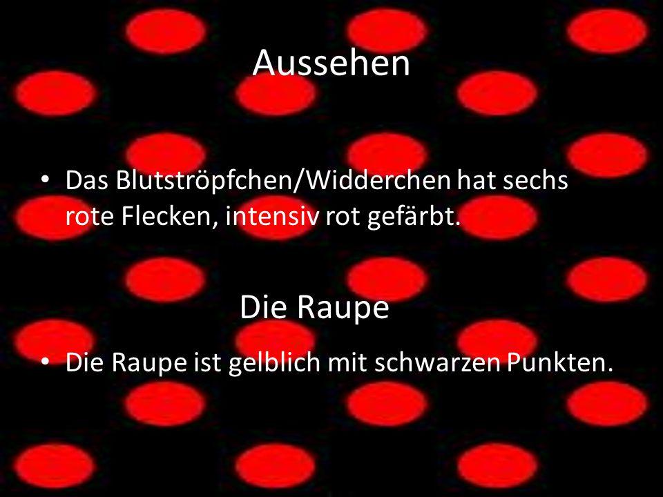 Aussehen Das Blutströpfchen/Widderchen hat sechs rote Flecken, intensiv rot gefärbt. Die Raupe Die Raupe ist gelblich mit schwarzen Punkten.