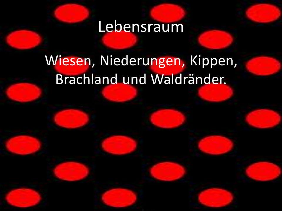 Lebensraum Wiesen, Niederungen, Kippen, Brachland und Waldränder.