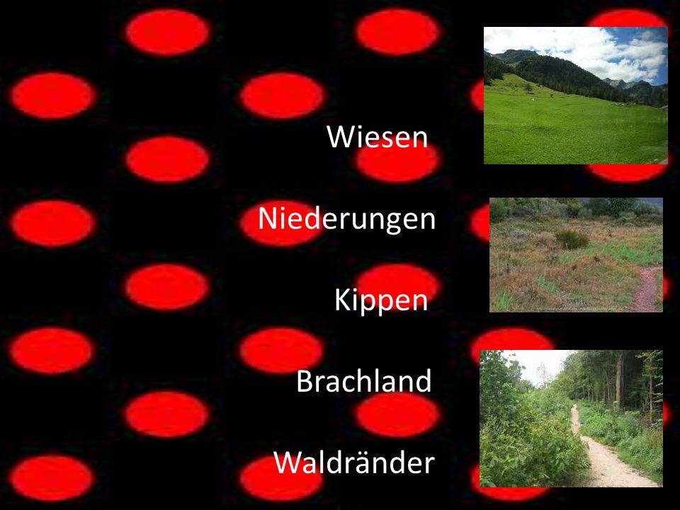 Wiesen Niederungen Kippen Brachland Waldränder