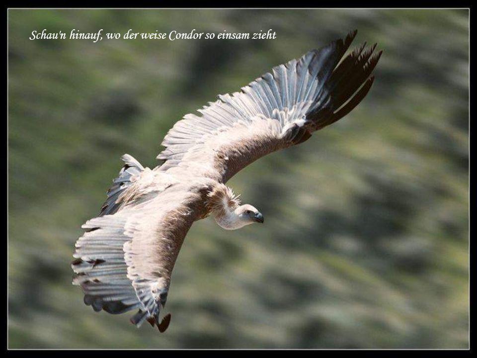 Schau n hinauf, wo der weise Condor so einsam zieht