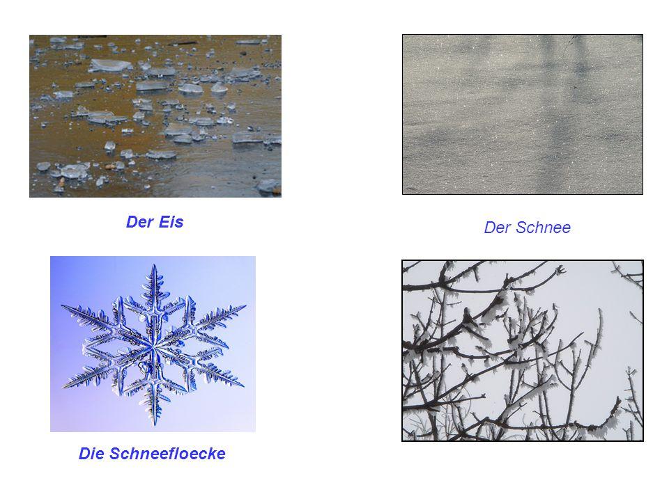 Der Eis Der Schnee Die Schneefloecke