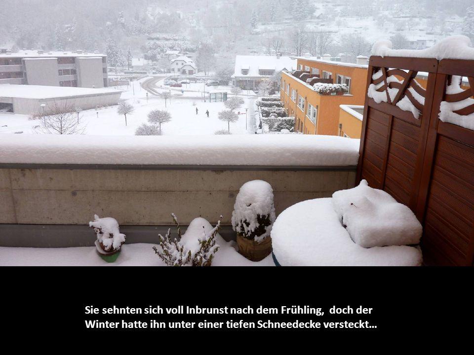 Sie sehnten sich voll Inbrunst nach dem Frühling, doch der Winter hatte ihn unter einer tiefen Schneedecke versteckt…