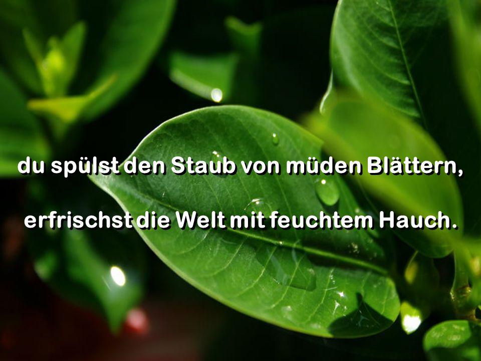 du spülst den Staub von müden Blättern, erfrischst die Welt mit feuchtem Hauch.