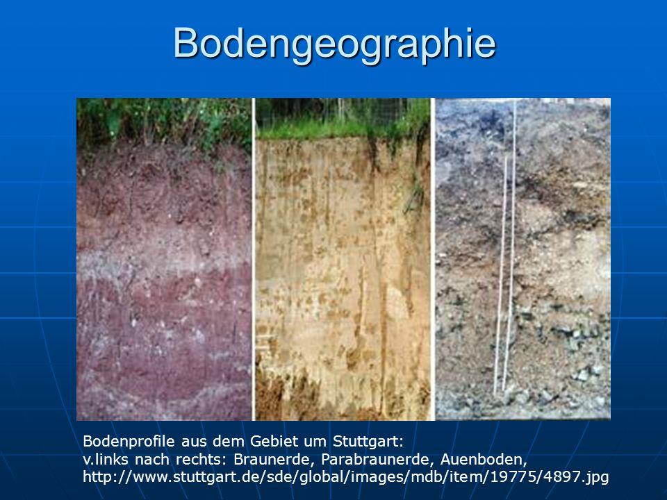 Bodengeographie Bodenprofile aus dem Gebiet um Stuttgart: v.links nach rechts: Braunerde, Parabraunerde, Auenboden, http://www.stuttgart.de/sde/global