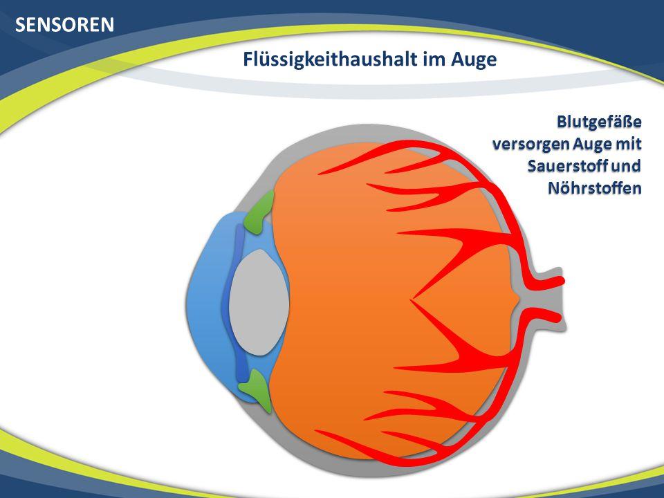 SENSOREN Flüssigkeithaushalt im Auge Blutgefäße versorgen Auge mit Sauerstoff und Nöhrstoffen