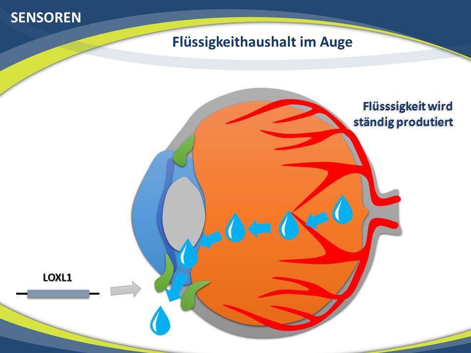 SENSOREN Flüssigkeithaushalt im Auge LOXL1 Flüsssigkeit wird ständig produtiert