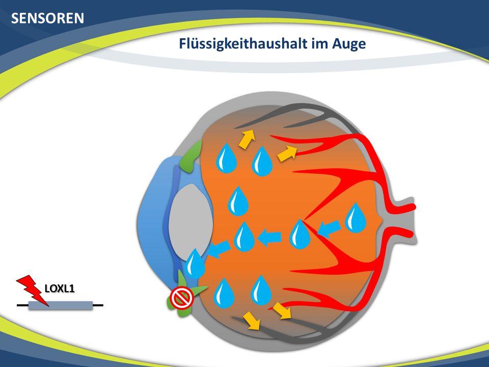 SENSOREN Flüssigkeithaushalt im Auge LOXL1