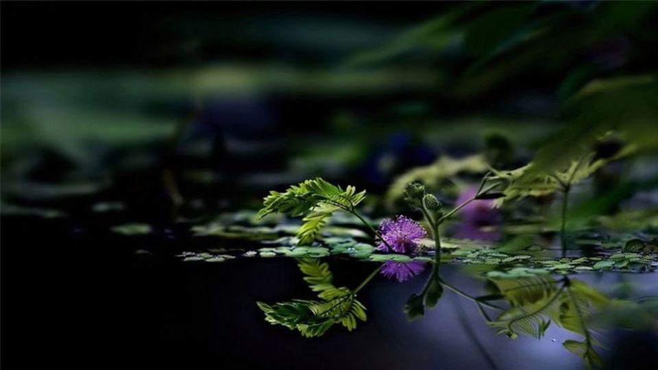 Wirkliche Stille kann nur eintreten, wenn auf der psychischen Ebene nichts registriert oder gespeichert wird. Krishnamurti
