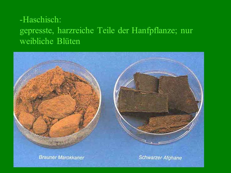 -Haschisch: gepresste, harzreiche Teile der Hanfpflanze; nur weibliche Blüten