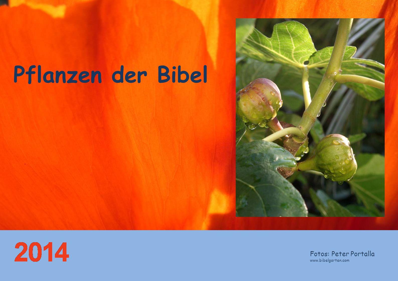 Pflanzen der Bibel Fotos: Peter Portalla www.bibelgarten.com
