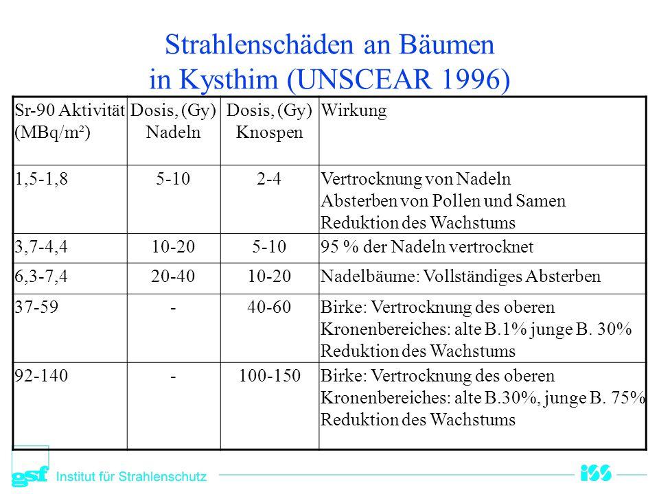 Strahlenschäden an Bäumen in Kysthim (UNSCEAR 1996) Sr-90 Aktivität (MBq/m²) Dosis, (Gy) Nadeln Dosis, (Gy) Knospen Wirkung 1,5-1,85-102-4Vertrocknung