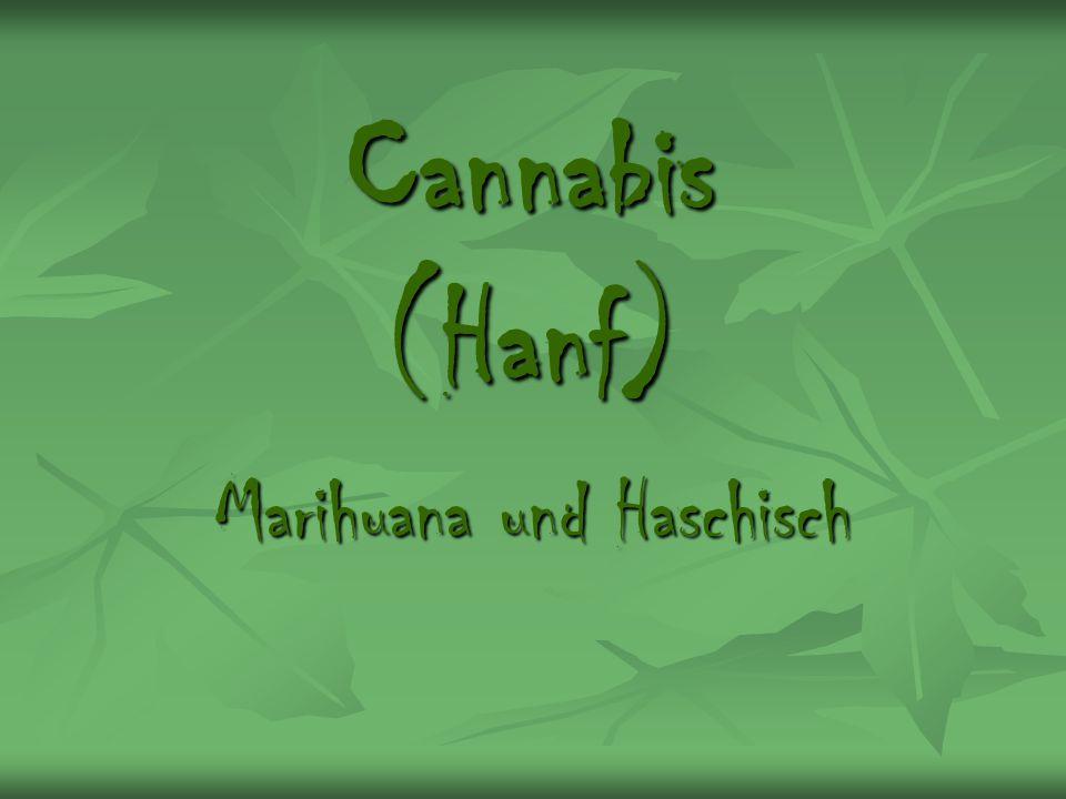 Cannabis (Hanf) Marihuana und Haschisch