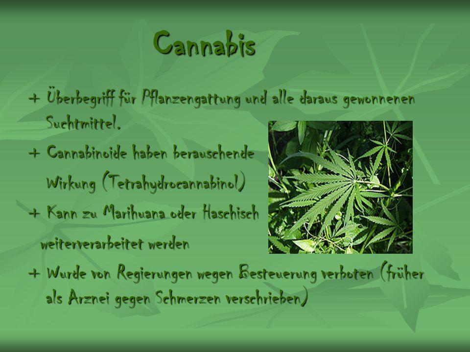 Cannabis + Überbegriff für Pflanzengattung und alle daraus gewonnenen Suchtmittel. + Cannabinoide haben berauschende Wirkung (Tetrahydrocannabinol) Wi