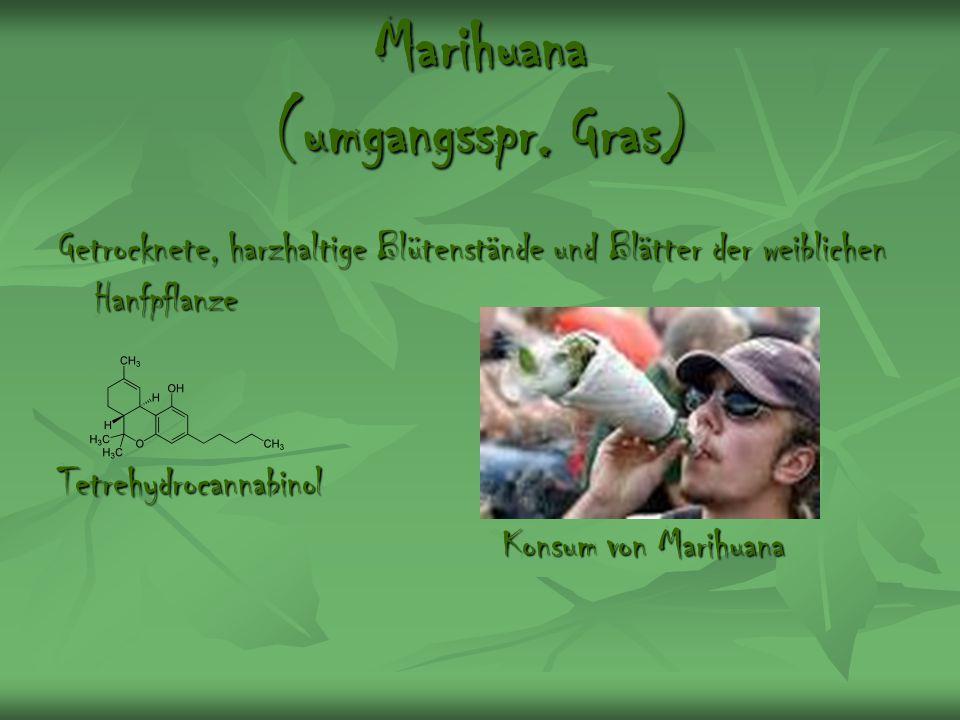 Marihuana (umgangsspr. Gras) Getrocknete, harzhaltige Blütenstände und Blätter der weiblichen Hanfpflanze Tetrehydrocannabinol Konsum von Marihuana Ko