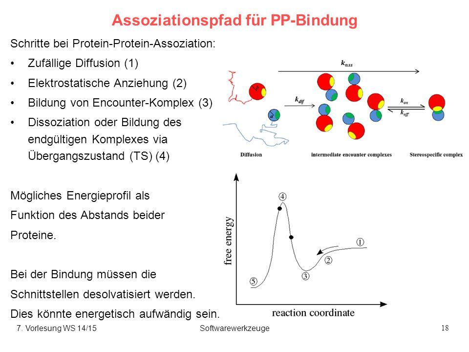 18 Assoziationspfad für PP-Bindung Schritte bei Protein-Protein-Assoziation: Zufällige Diffusion (1) Elektrostatische Anziehung (2) Bildung von Encounter-Komplex (3) Dissoziation oder Bildung des endgültigen Komplexes via Übergangszustand (TS) (4) Mögliches Energieprofil als Funktion des Abstands beider Proteine.