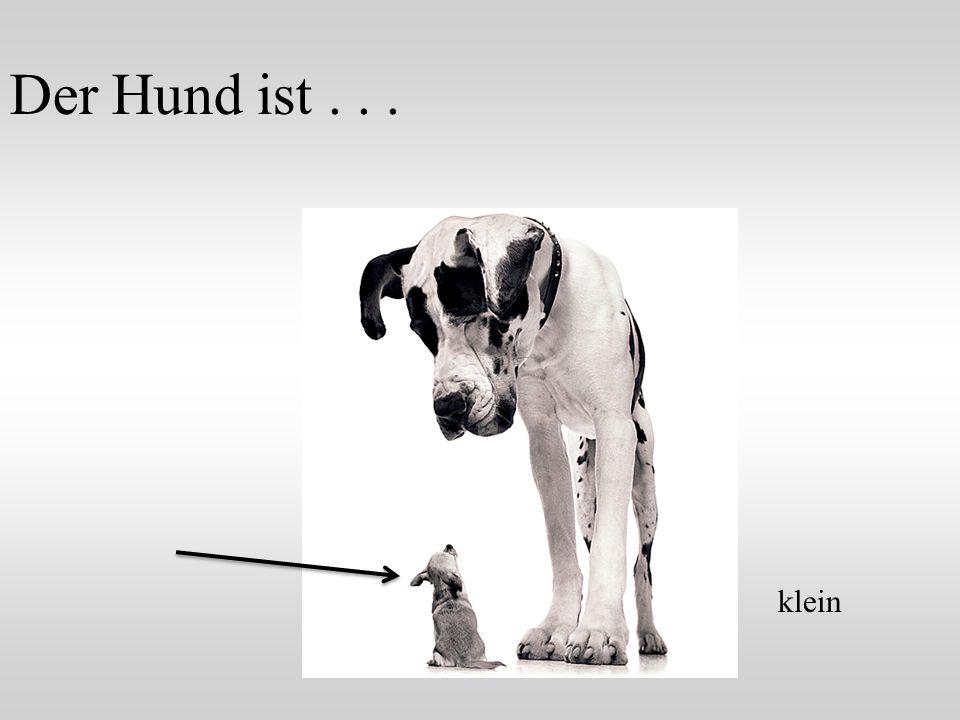 Der Hund ist... klein