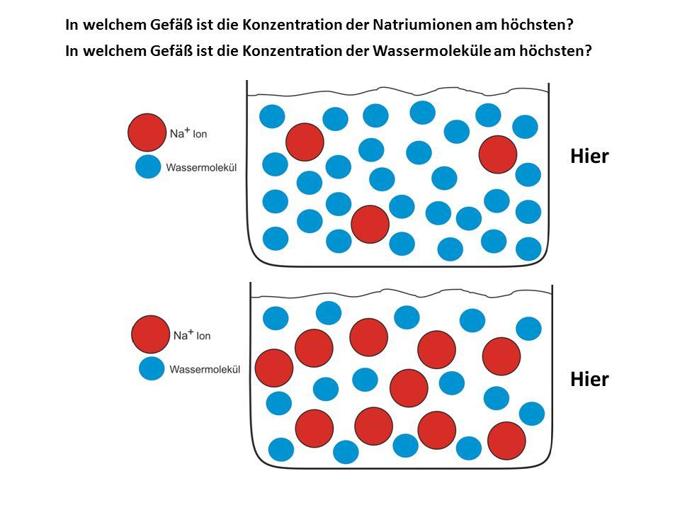 In welchem Gefäß ist die Konzentration der Natriumionen am höchsten? In welchem Gefäß ist die Konzentration der Wassermoleküle am höchsten? Hier