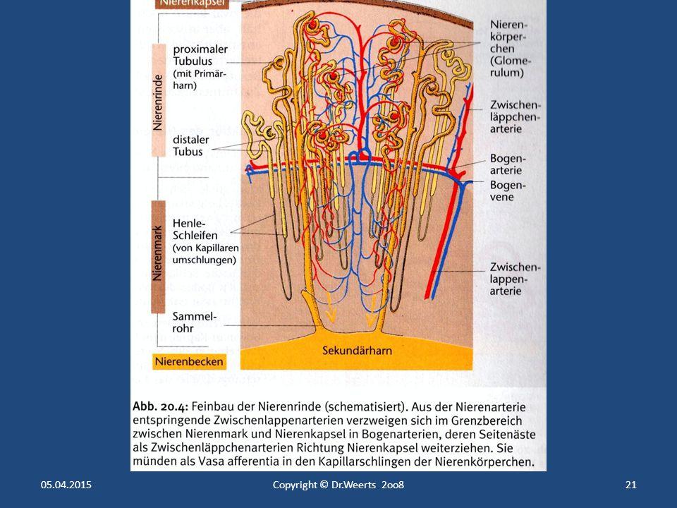 Der innere Nieren- Aufbau 3 Zonen im Längsschnitt Nierenbecken liegt im Inneren, Sammelbecken für den Urin Nierenbecken liegt im Inneren, Sammelbecken für den Urin Nierenmark mittlerer Bereich um das Nierenbecken herum, enthält das Tubulussystem (Harnkanälchen) Nierenmark mittlerer Bereich um das Nierenbecken herum, enthält das Tubulussystem (Harnkanälchen) Nierenrinde ganz außen, enthält die Glomerula (Nierenkörperchen) Nierenrinde ganz außen, enthält die Glomerula (Nierenkörperchen) Columnae renales Ausläufer der Rinde, die zum Nierenbecken ziehen Columnae renales Ausläufer der Rinde, die zum Nierenbecken ziehen Markpyramiden Gliederung der Markschicht in mehrere Lappen Markpyramiden Gliederung der Markschicht in mehrere Lappen Nierenpapillen Spitzen der Markpyramiden, ragen in das Nierenbecken hinein Nierenpapillen Spitzen der Markpyramiden, ragen in das Nierenbecken hinein Markstrahlen Fortsetzung des Markes in Richtung Rinde nach oben Markstrahlen Fortsetzung des Markes in Richtung Rinde nach oben Nierenkelchsystem Teil des Nierenbeckens in den die Nierenpapillen münden Nierenkelchsystem Teil des Nierenbeckens in den die Nierenpapillen münden 05.04.2015Copyright © Dr.Weerts 2oo820
