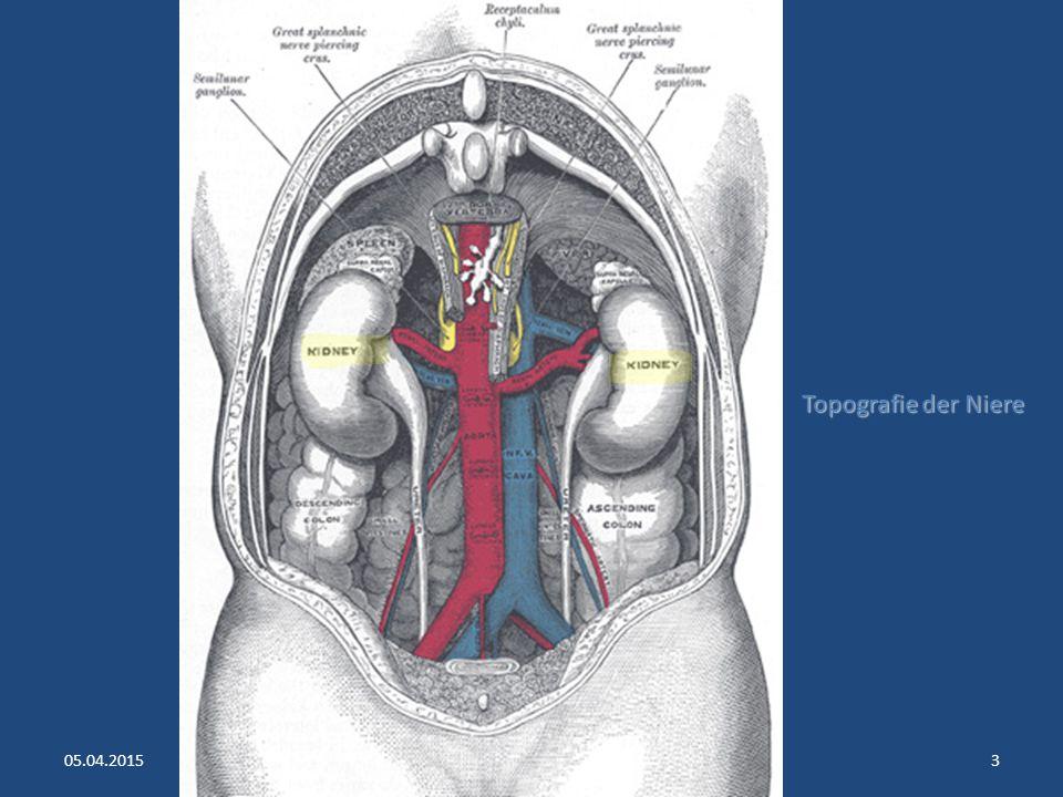 Die Harnleiter 30 cm lang 30 cm lang 2.5 mm dick 2.5 mm dick retroperitoneal retroperitoneal ziehen zum kleinen Becken ziehen zum kleinen Becken münden in die Harnblase münden in die Harnblase 05.04.2015Copyright © Dr.Weerts 2oo843 Einmündungsstelle der Ureteren in die Harnblase wirkt wie ein Ventil, um Rückfluss (Reflux) des Blasenurins in die Ureteren zu verhindern