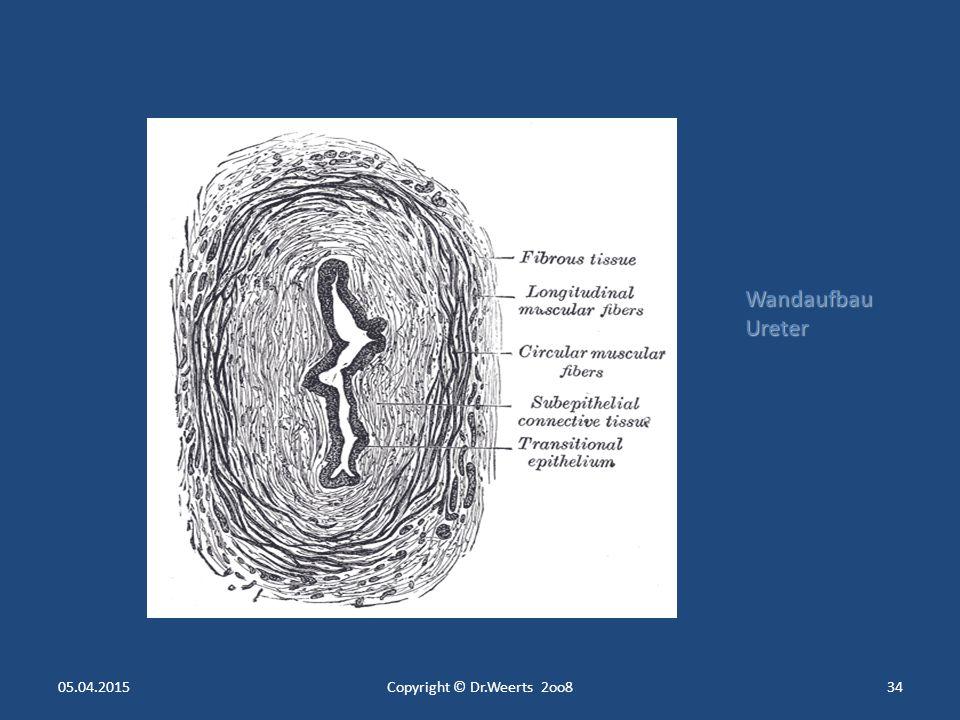 05.04.2015Copyright © Dr.Weerts 2oo833 Glomerulum und Tubulus- System der Niere