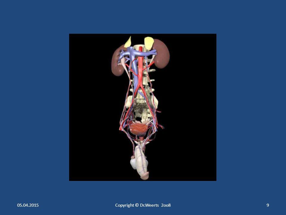 """Die Produktion des Glomerulumfiltrats (Primärharn) Glomerulum = Blutgefäßknäuel + Bowman- Kapsel umgebende Bindegewebskapsel Glomerulum = Blutgefäßknäuel + Bowman- Kapsel umgebende Bindegewebskapsel Äußeres und inneres Blatt der Bowman- Kapsel umschließen den Raum in den durch eine dünne Membran des kapillaren Gefäßendothels als Filtrat des Blutplasmas - der Primärharn- """"abgepresst wird Äußeres und inneres Blatt der Bowman- Kapsel umschließen den Raum in den durch eine dünne Membran des kapillaren Gefäßendothels als Filtrat des Blutplasmas - der Primärharn- """"abgepresst wird Menge des Primärharns 150 – 180 Liter/Tag Menge des Primärharns 150 – 180 Liter/Tag ( """" 1 Badewanne voll ) 05.04.2015Copyright © Dr.Weerts 2oo839"""