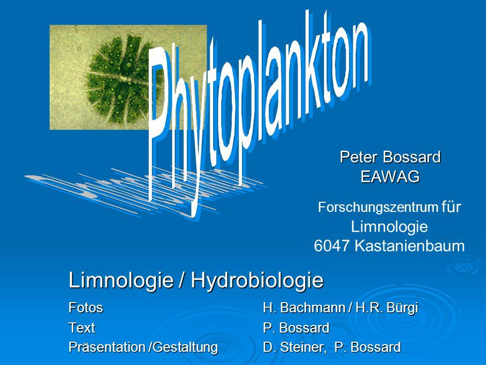 Limnologie / Hydrobiologie Limnologie / Hydrobiologie Fotos H. Bachmann / H.R. Bürgi Text P. Bossard Präsentation /Gestaltung D. Steiner, P. Bossard P