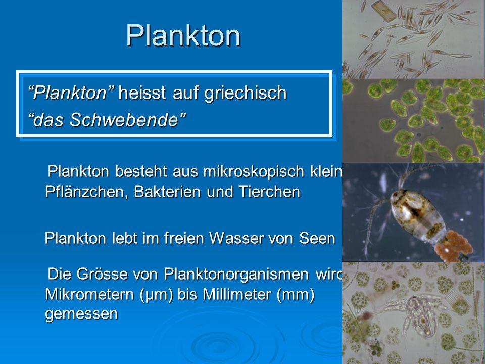 """Plankton """"Plankton"""" heisst auf griechisch """"das Schwebende"""" Plankton besteht aus mikroskopisch kleinen Pflänzchen, Bakterien und Tierchen Plankton best"""