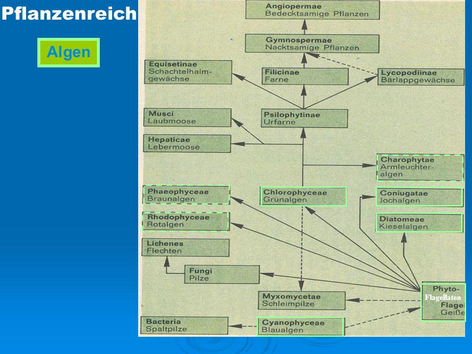Sonnenlicht Sauerstoff Kohlendioxyd Spurenelemente Phosphat Nitrat Algen